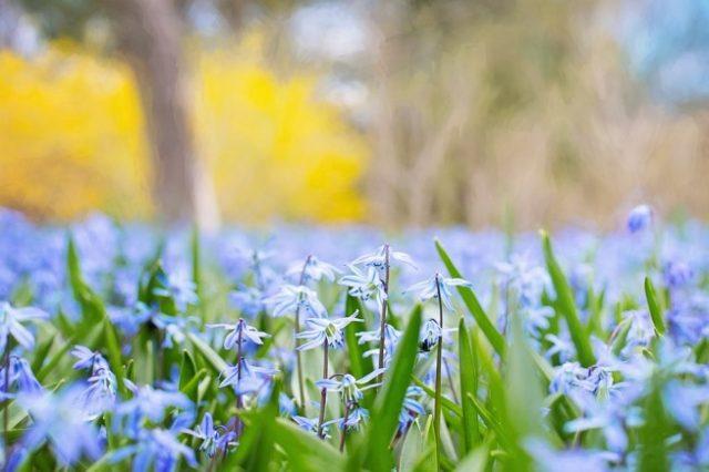pismeni sastav proleće