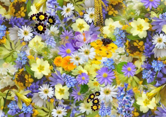 cveće u proleće