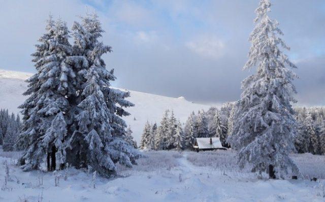 Zima u šumi