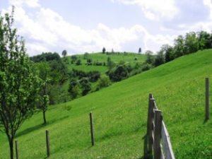 Ljubis selo (wikimedia.org/Rako Smiljanic)