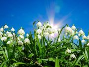 zagonetke o cveću