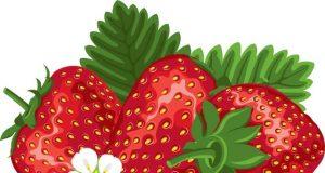 tri jagode