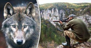 lovac i vuk