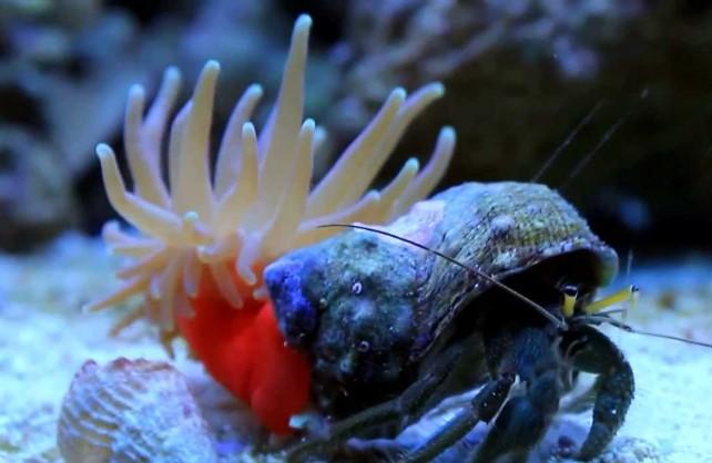 rak pustinjak i morska sasa