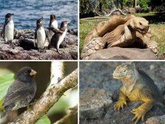životinje sa galapagosa