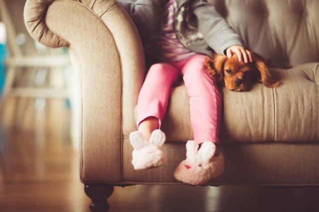 pas u kući