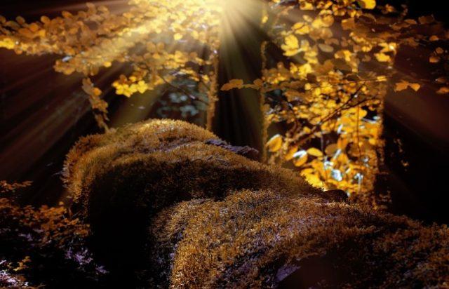 jesen u šumi