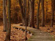 jesenja setnja