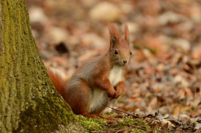 Priče o vevericama