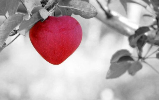 Jabuka u obliku srca