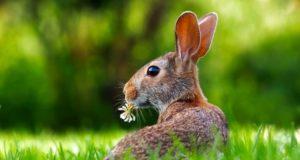 zečevi i žabe