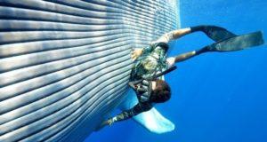 plavi kit izbliza
