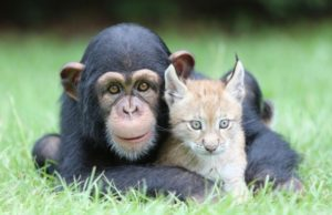 Majmun i mačak