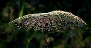 paukova mreza