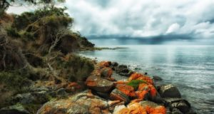 Tasmanija