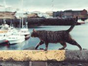 Bajka o ribaru i mačku