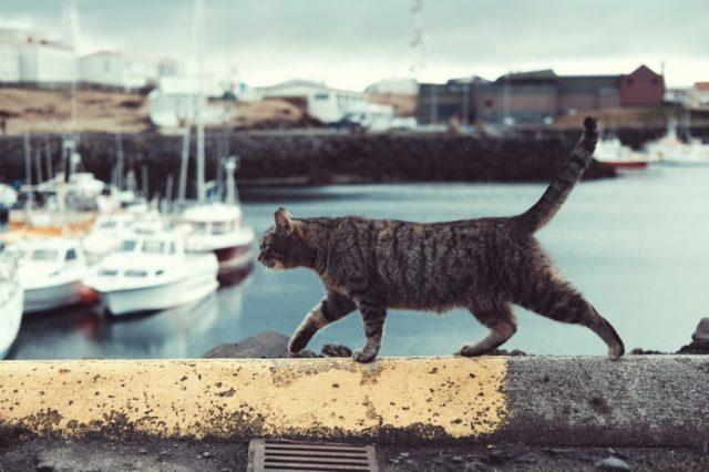 Балада о рибару и мачку – Бранко Ћопић