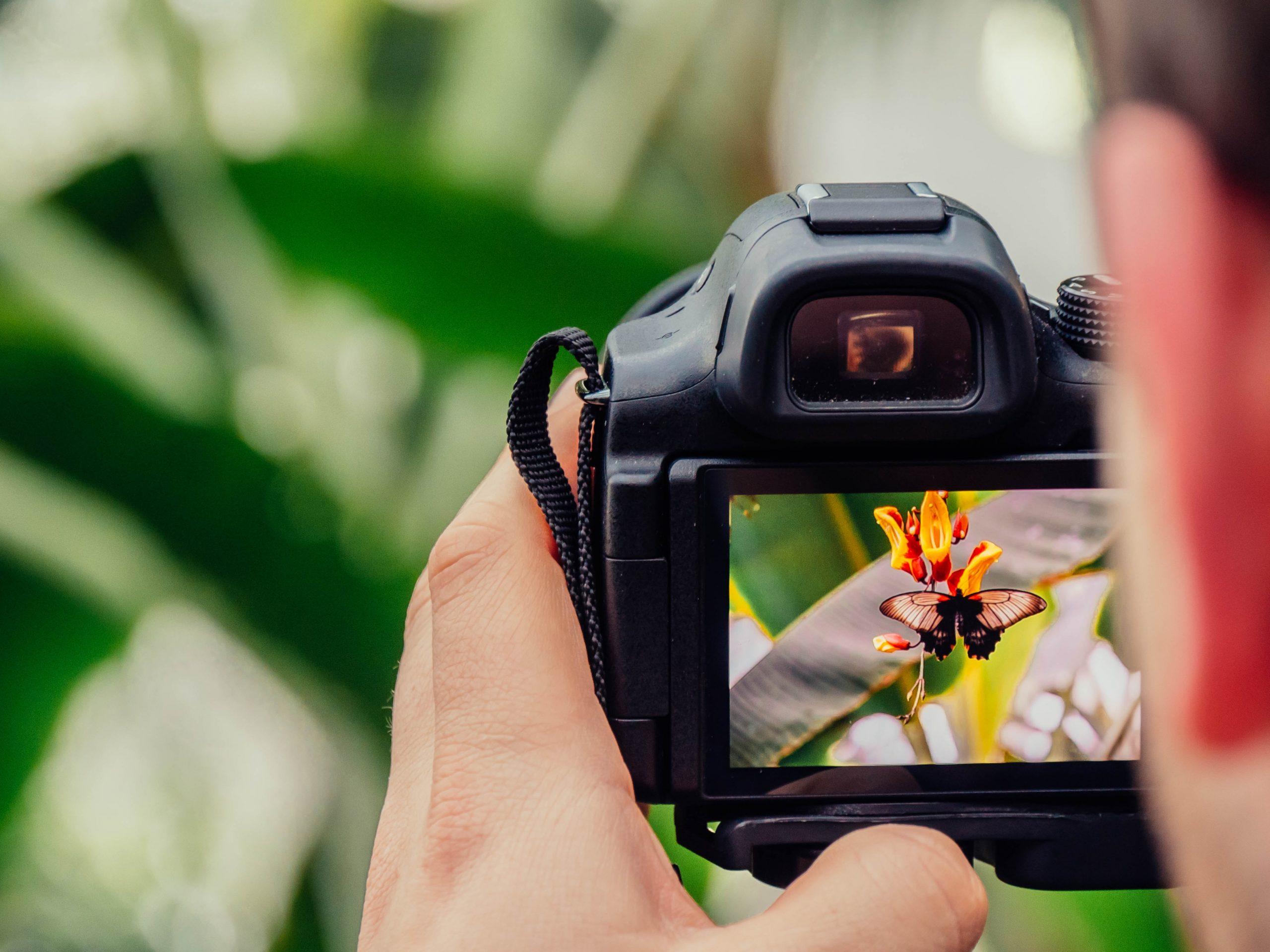 fotografija pravljenja fotografije leptira